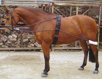 Alivio de Harry con el caballo el cinchuelo