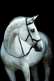 Riendas Micklem Comp Rein English Leather de Horseware Rambo