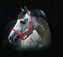 Cabestro Horseware de seguridad para el campo