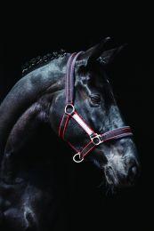 Cabestro acolchado Horseware Rambo