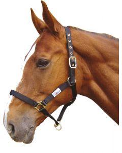 Controlador de Halter Horse de Harry