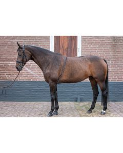 Harry Horse Lunging Aid suave