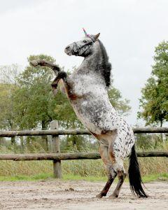Cuerno de unicornio QHP