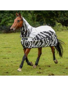 Bucas Zebra de lluvia de zumbido