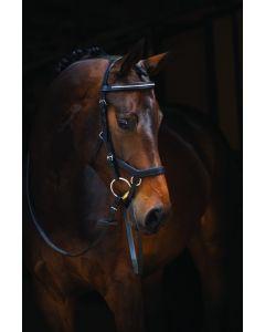 Brida Horseware Rambo Micklem Diamante Competition