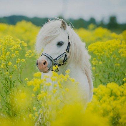 Mantas de hasta 165cm  (Pony shetland)