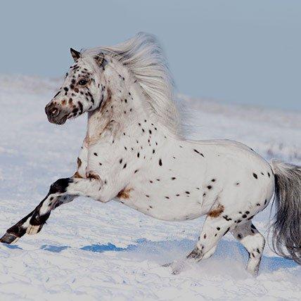 Mantas de invierno de hasta 165 cm (Pony shetland)