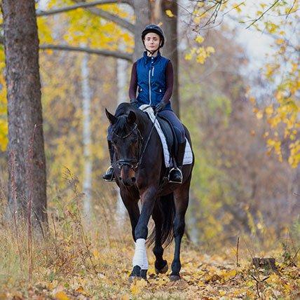 Equipos y complementos de equitación
